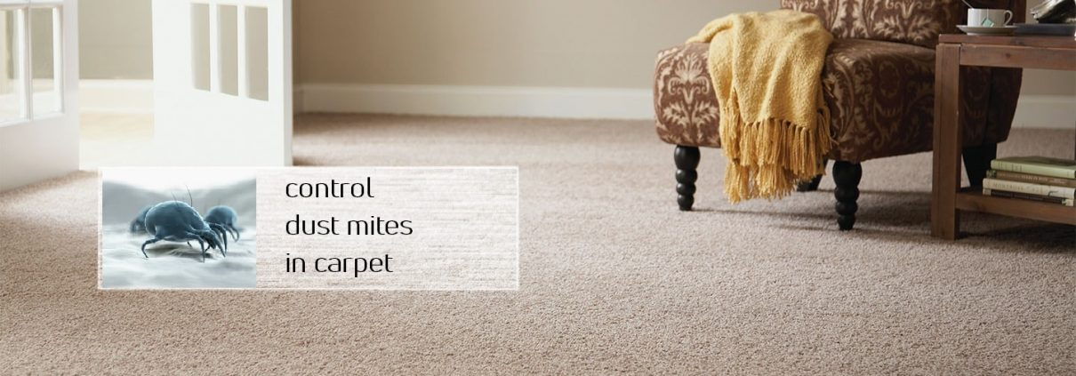 Control the dust mites in the carpet